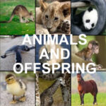 Matching Animals and their Offspring
