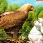 Bird Jigsaw Puzzles Online