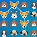 Dog Rush: Matching Dogs