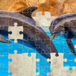 Dolphin Jigsaw Puzzle 64 Pieces