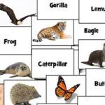 Animal Names in English