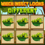 Find the Different Insect
