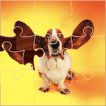 Funny Dog Jigsaw Puzzles