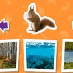 Habitat: where do animals live?