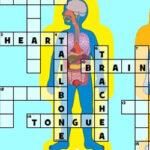 Human Body Crossword