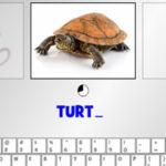 Keyboard Typing: Animals