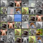 Animals Sudoku