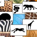 The Skin of Animals