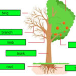 Tree Parts Game